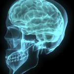 Czym się różni funkcjonowanie mózgu kobiety i mężczyzny?