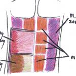 Budowa brzucha i świetny trening brzucha