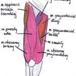 Mięśnie uda i świetne ćwiczenia na uda